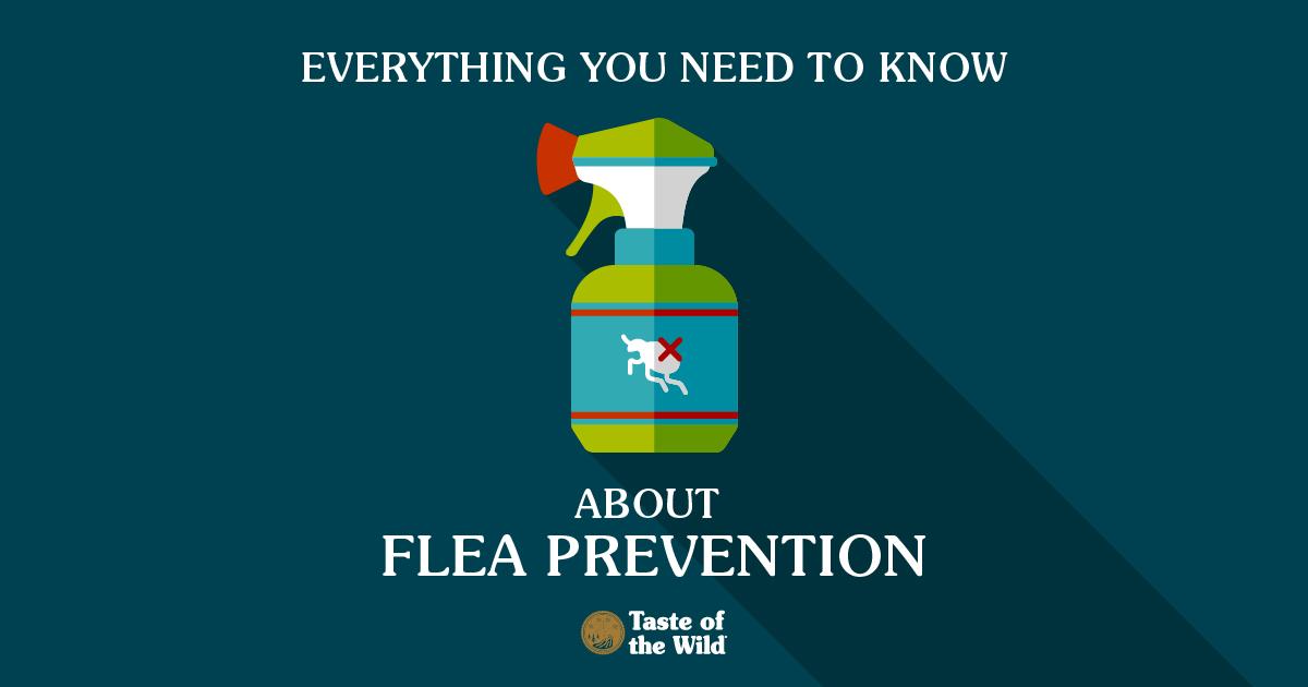 Flea Prevention graphic