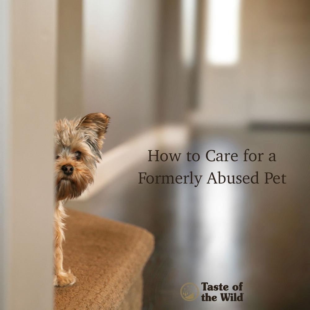 abused-pet
