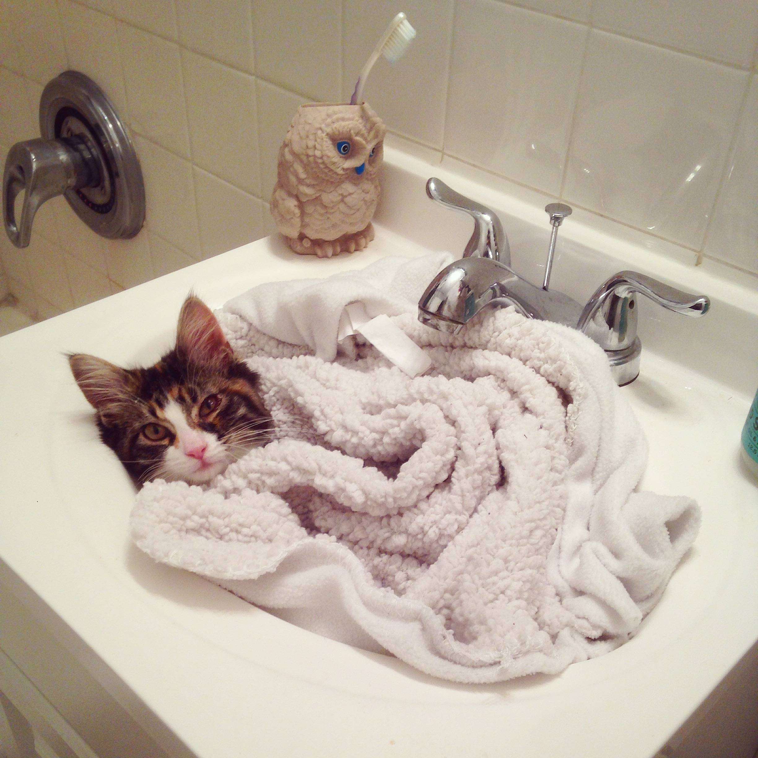 sick kitty in sink bed