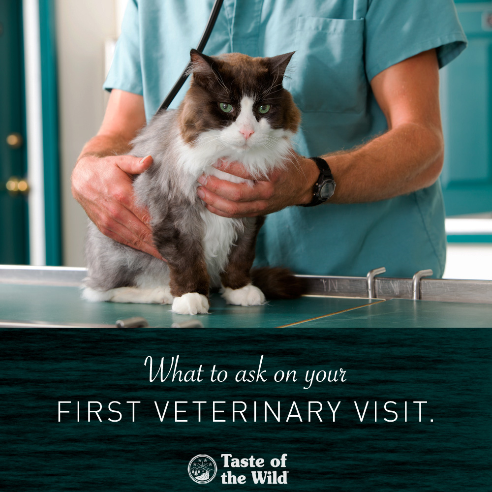 What to Ask on Your First Veterinary Visit