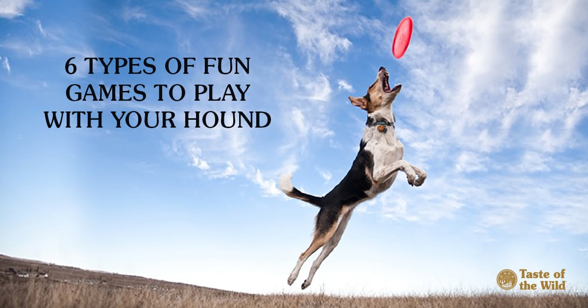 Fun Games to Play With Your Dog