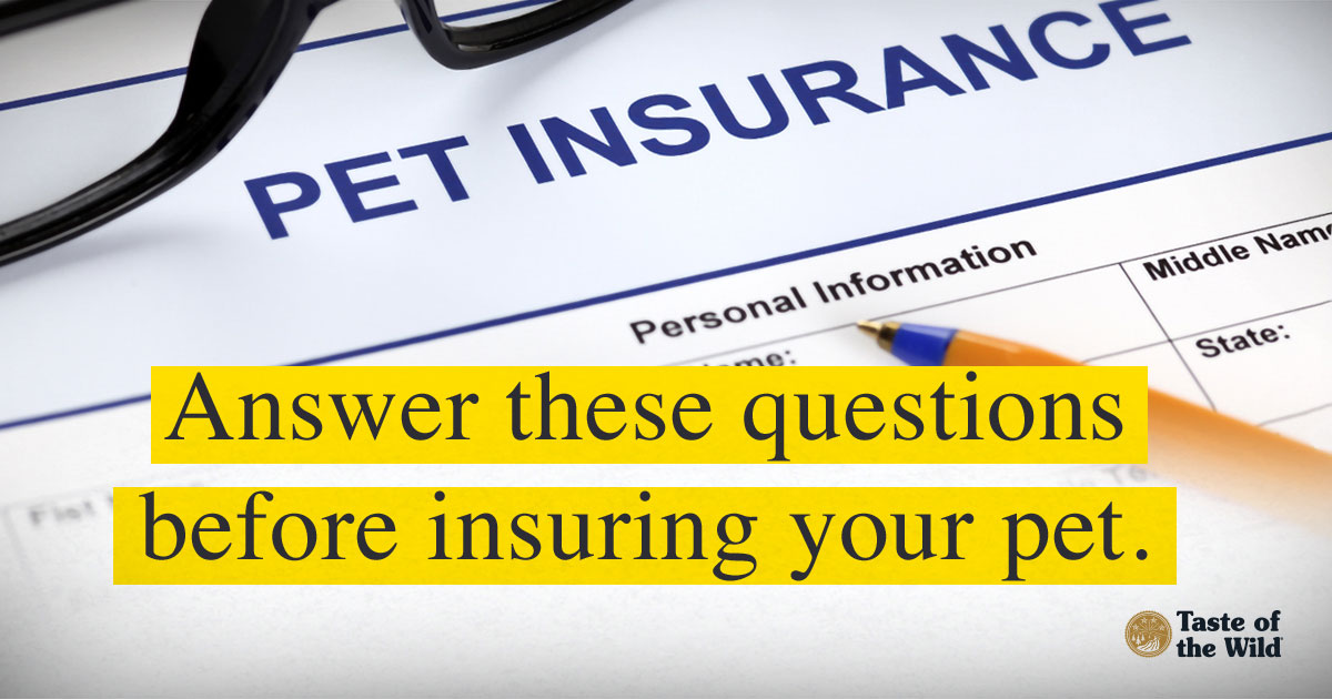 Insurance for Pets image