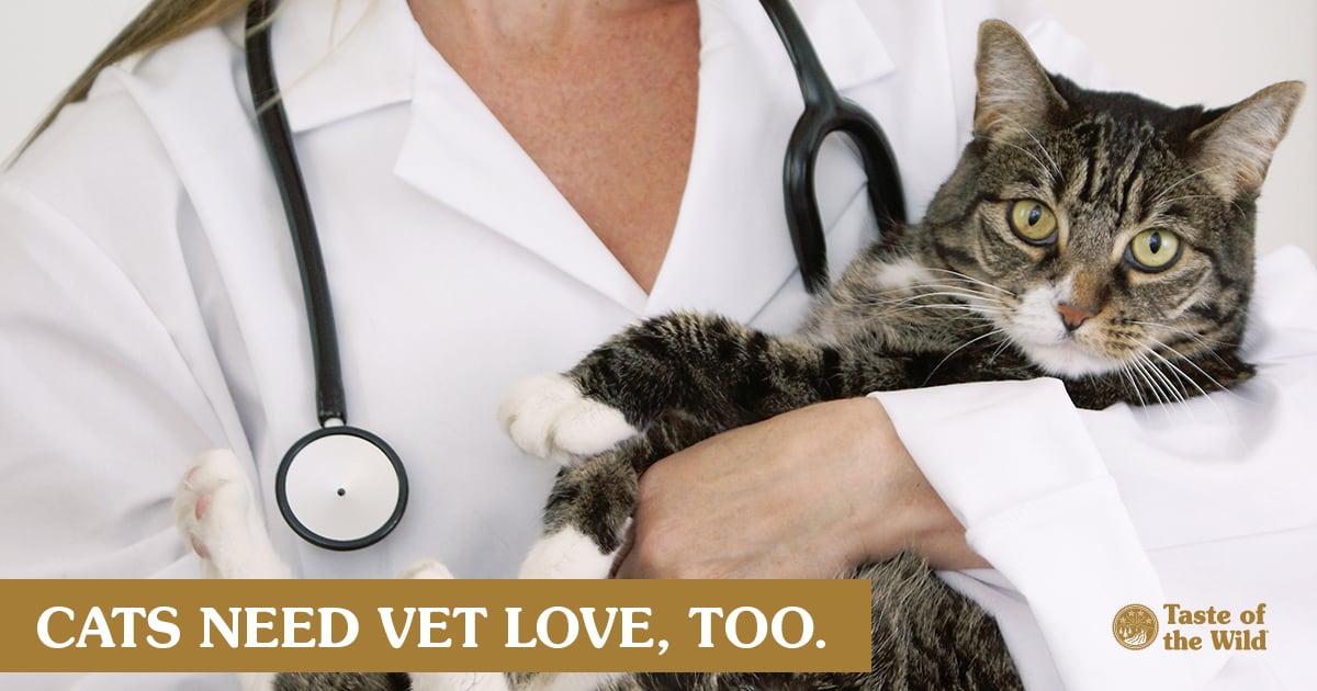 Female Veterinarian Holding a Cat | Taste of the Wild