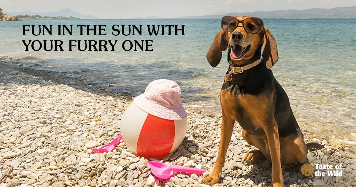 Dog wearing sunglasses sitting on a beach   Taste of the Wild