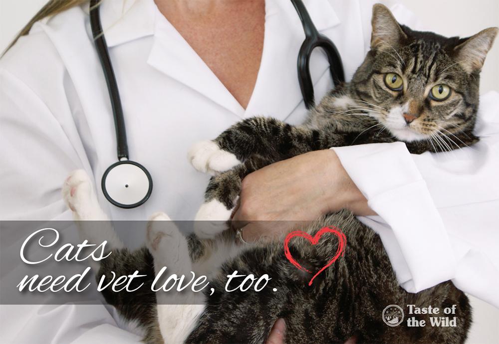 Cats need vet love, too