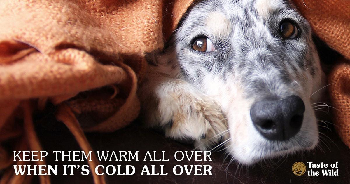 Dog under a blanket