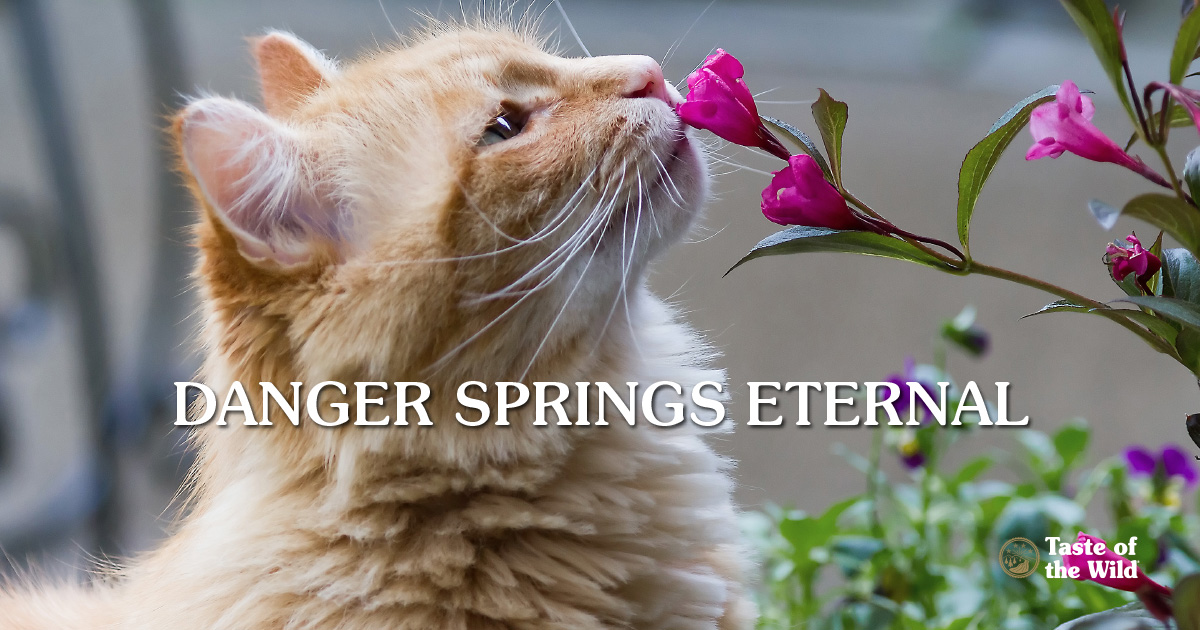 Spring dangers for pets