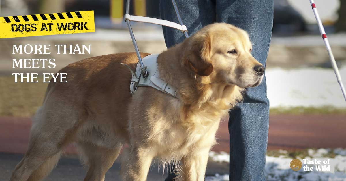 Seeing Eye Dog with owner