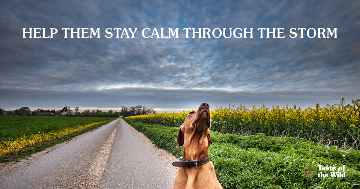Storm anxiety in dogs