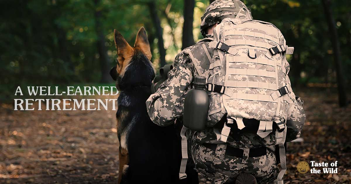 German Shepherd and Soldier sitting together