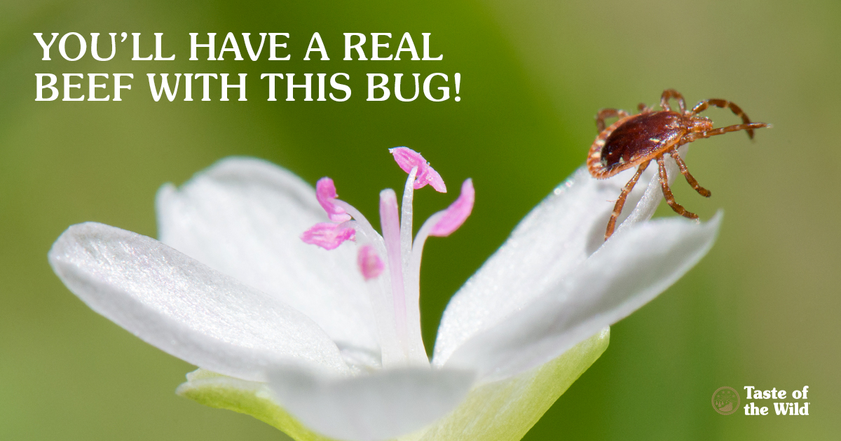 You'll have a real beef with this bug!