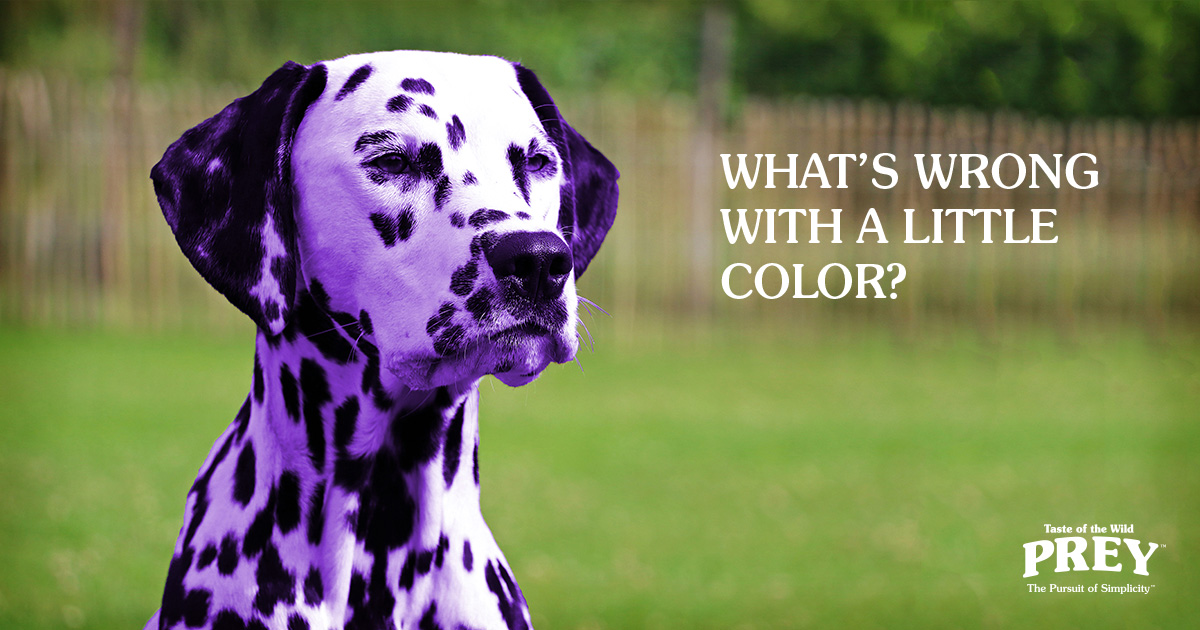 artificial food coloring and pets | taste of the wild prey