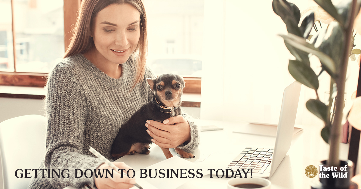 """Getting Down to Business on """"Take Your Dog to Work Day."""""""
