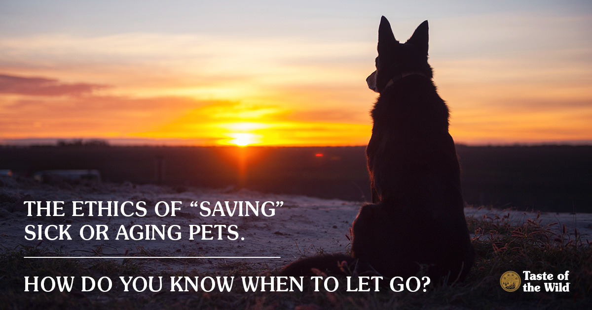 """Ethics of """"saving"""" sick or aging pets"""