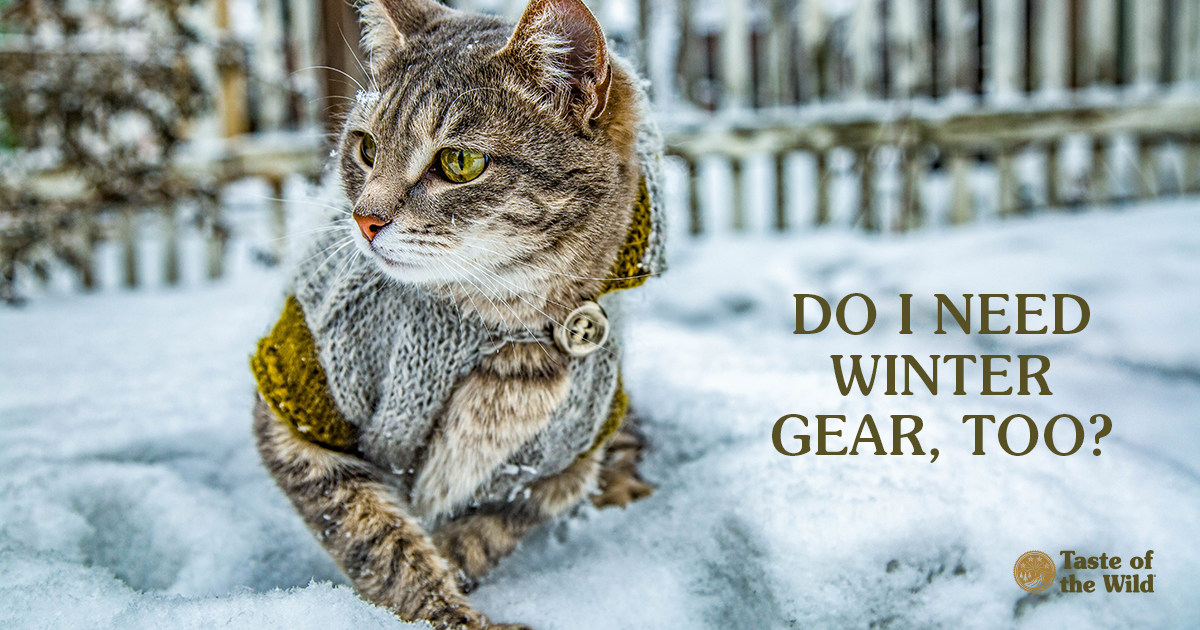 Does Your Cat Need Winter Gear Too? | Taste of the Wild