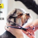 Yorkshire Terrier Getting A Haircut From Female Pet Groomer | Taste of the Wild Pet Food