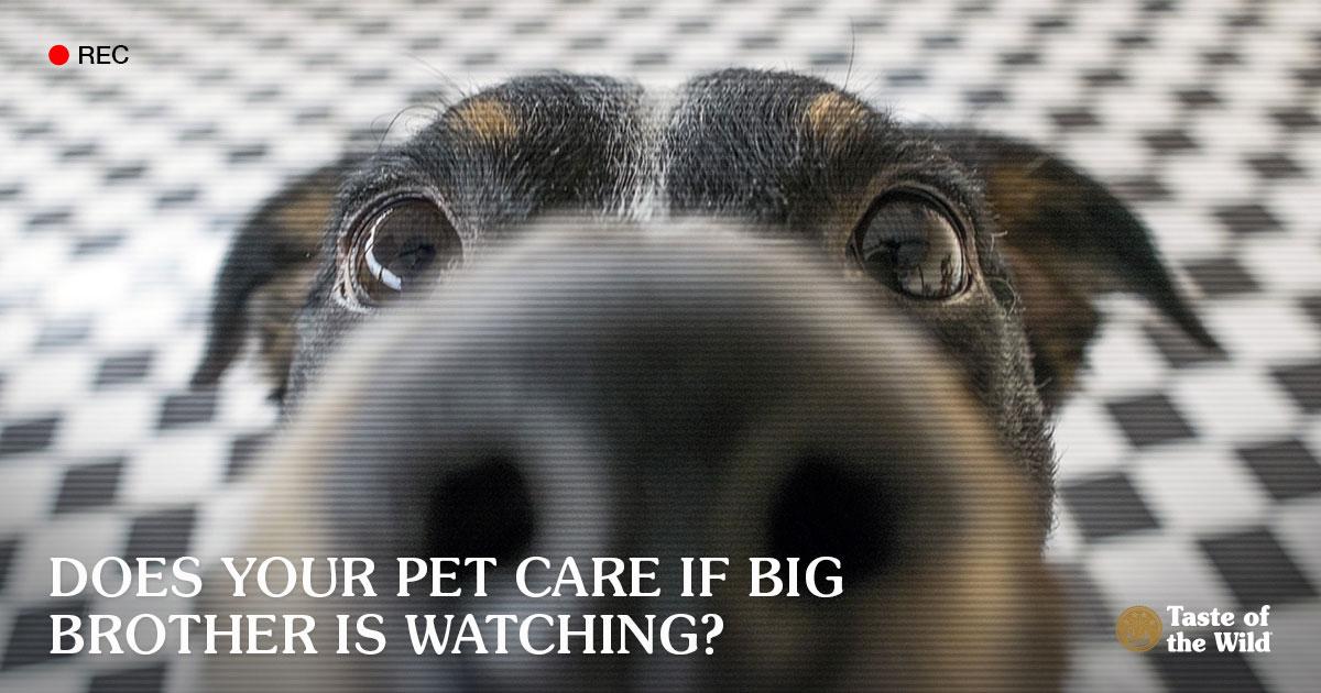 Playful Dog Looking at Pet Camera Lens   Taste of the Wild Pet Food