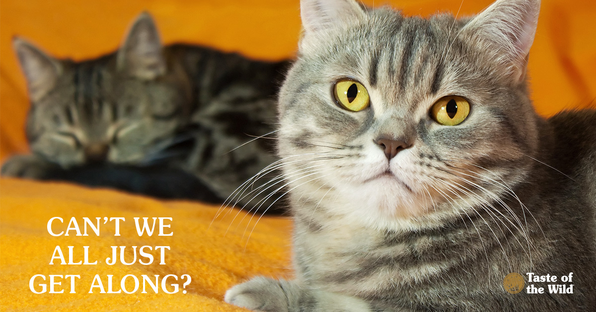Two Cats Resting Separately on an Orange Blanket | Taste of the Wild Pet Food