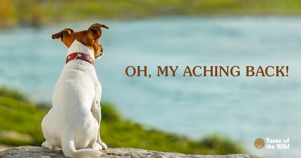 Jack Russell Terrier Sitting on Rock by a Lake | Taste of the Wild Pet Food