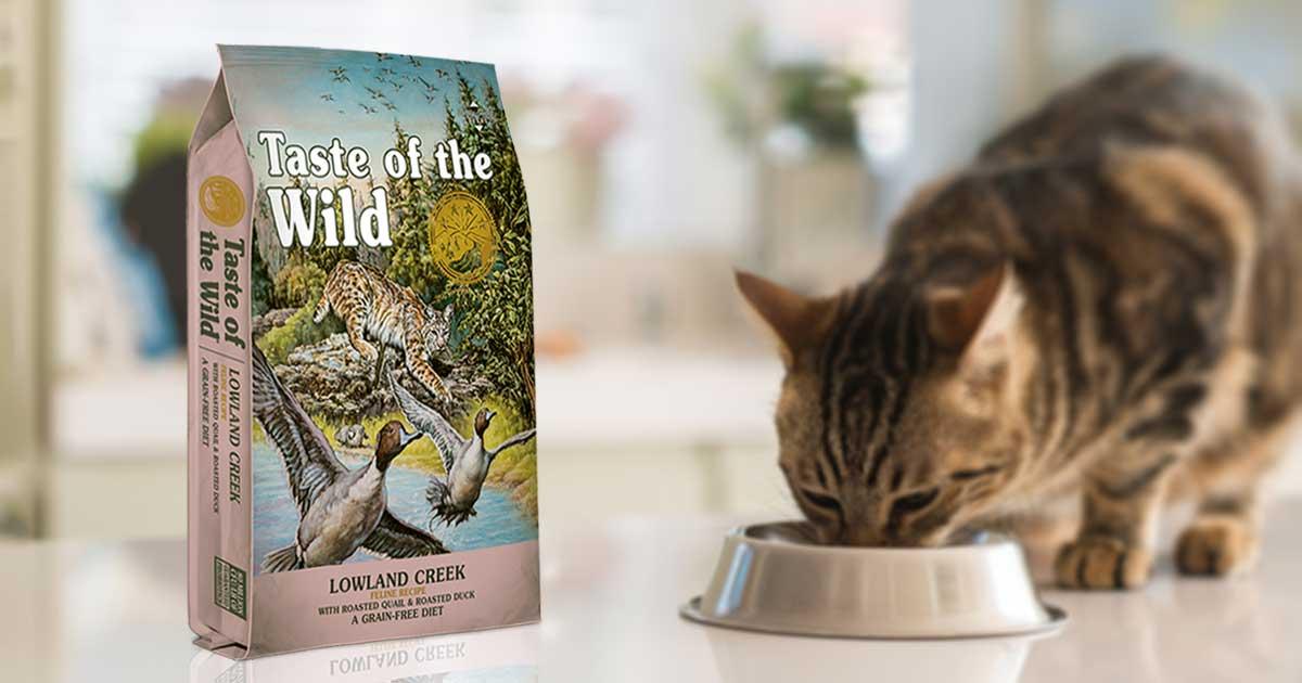 Cat Eating Taste of the Wild Lowland Creek Food From Its Bowl | Taste of the Wild Pet Food