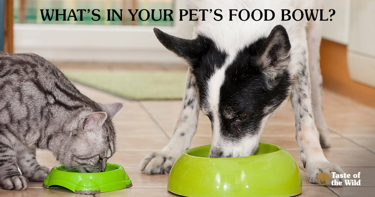 Cat and Dog Eating Out of Food Bowls in the Kitchen   Taste of the Wild Pet Food