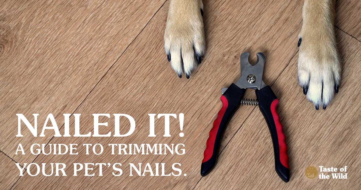 Picture of Dog Paws and Pet Nail Trimmer | Taste of the Wild Pet Food