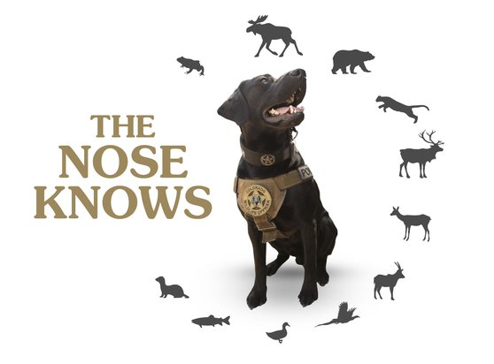 "Wildlife Management Dog Cash with Silhouettes of Wild Animals and the Caption ""The Nose Knows"" 