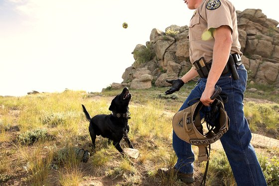 Officer Brock with His Black Labrador Retriever K9 Partner Cash Playing Fetch | Taste of the Wild Pet Food