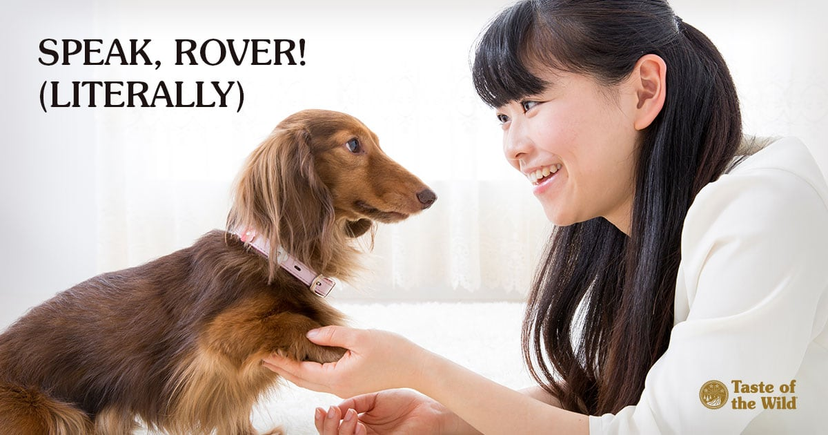 Young Asian Woman Shaking the Paw of Her Long-Haired Dachshund | Taste of the Wild Pet Food