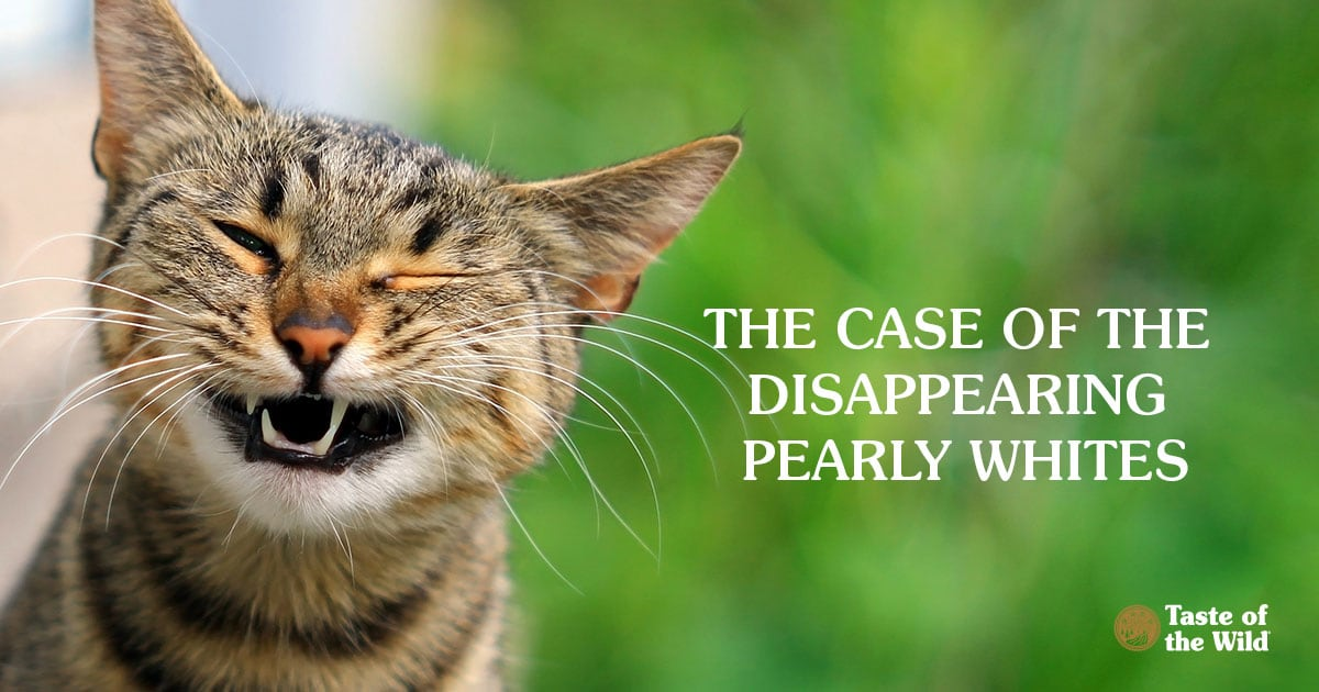 The Case of the Disappearing Pearly Whites | Taste of the Wild