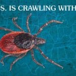 Lyme Disease Forecast Graphic | Taste of the Wild