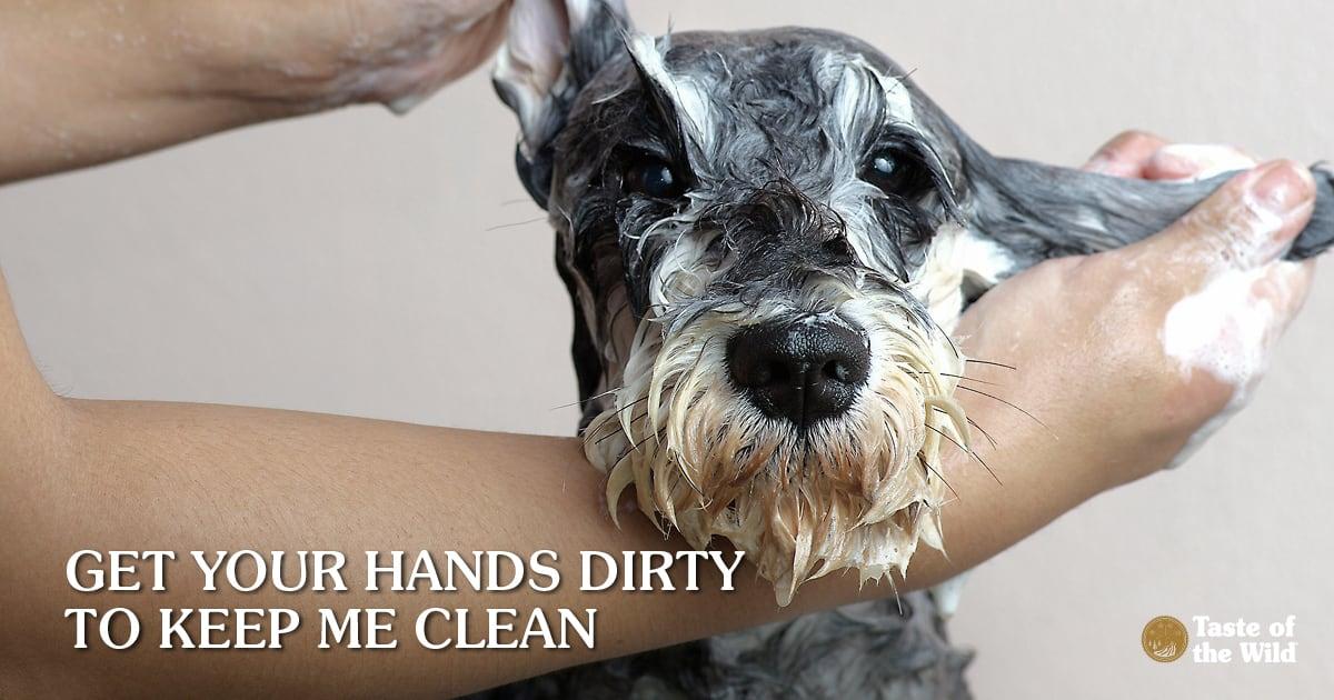 Grey dog getting a bath | Taste of the Wild
