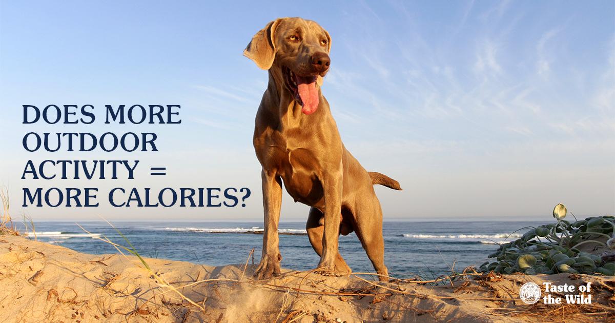 Dog Walking on the Beach | Taste of the Wild