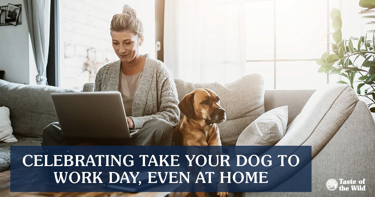 Dog Sitting Next to Owner While She Works at Home | Taste of the Wild