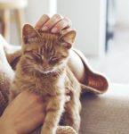 Woman Petting a Kitten | Taste of the Wild