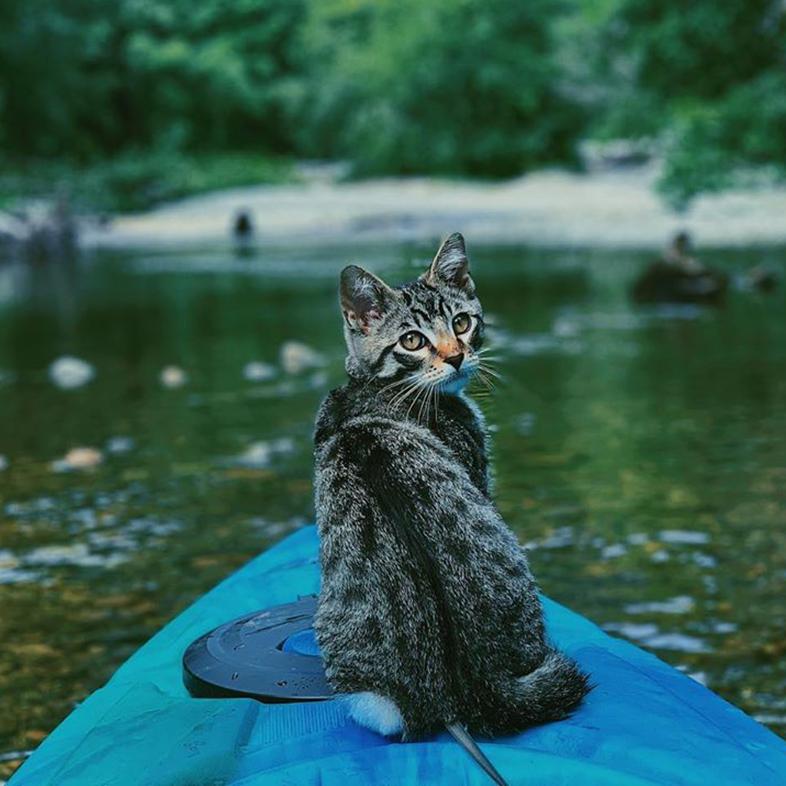 Cat on a Kayak   Taste of the Wild
