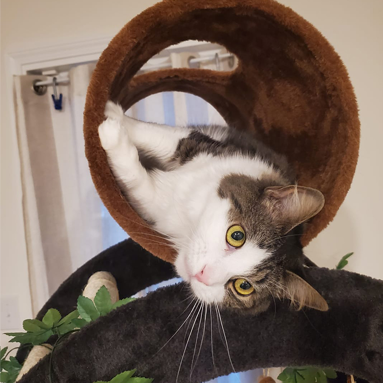 Cat on a Play Tower   Taste of the Wild