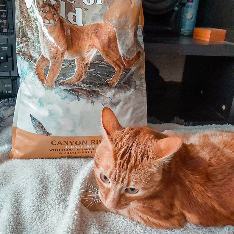 Cat with Bag of Cat Food   Taste of the Wild