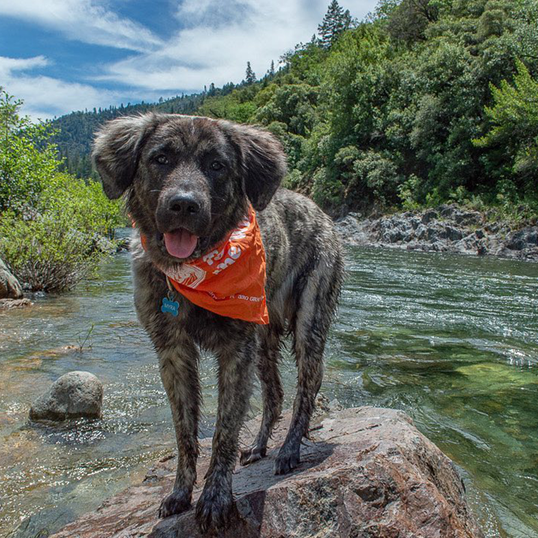 Dog at the River   Taste of the Wild