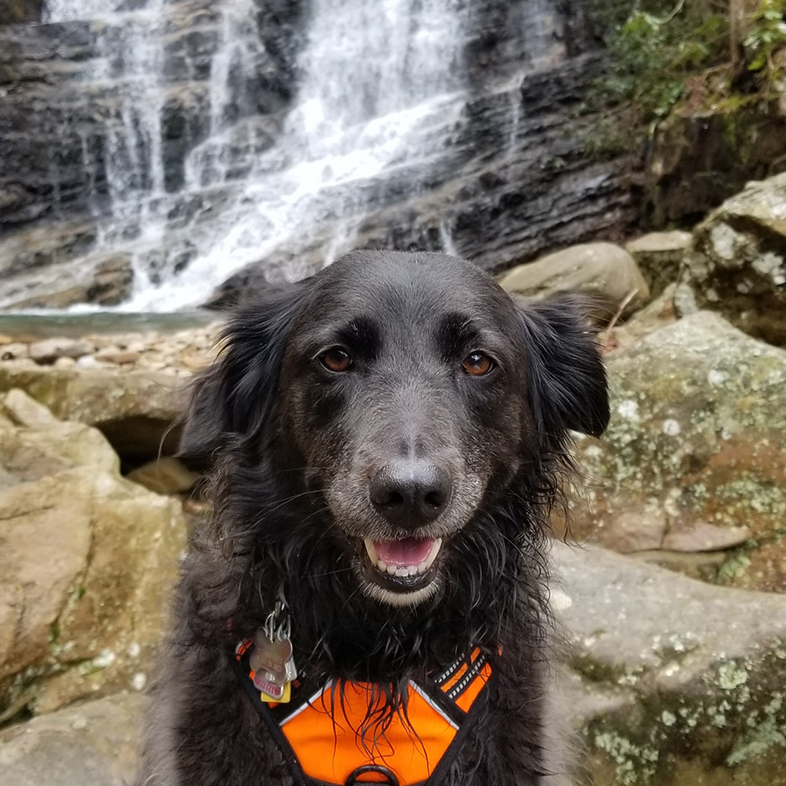 Dog in Front of a Waterfall   Taste of the Wild