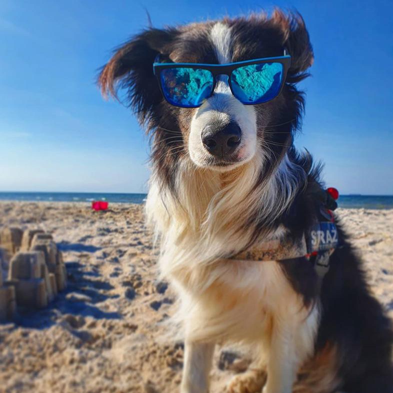 Dog on the Beach Wearing Sunglasses   Taste of the Wild