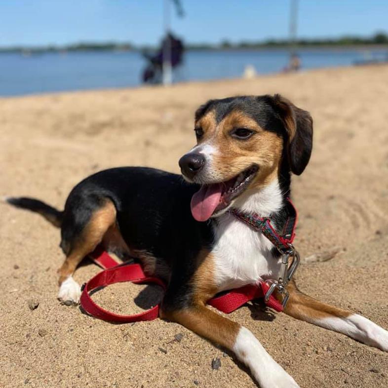 Dog on the Beach   Taste of the Wild