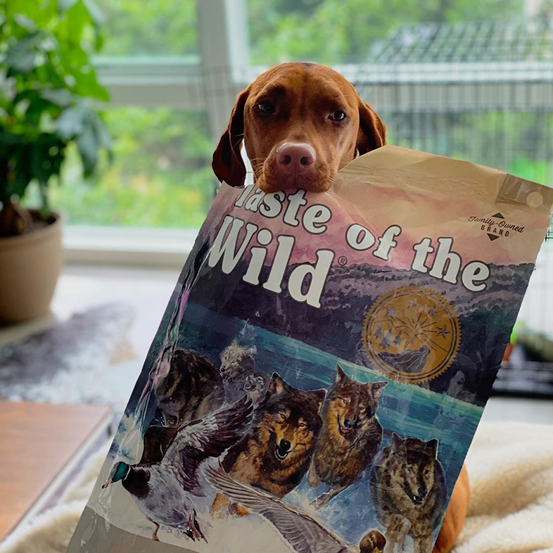 Viszla Dog Posing with Taste of the Wild Bag | Taste of the Wild