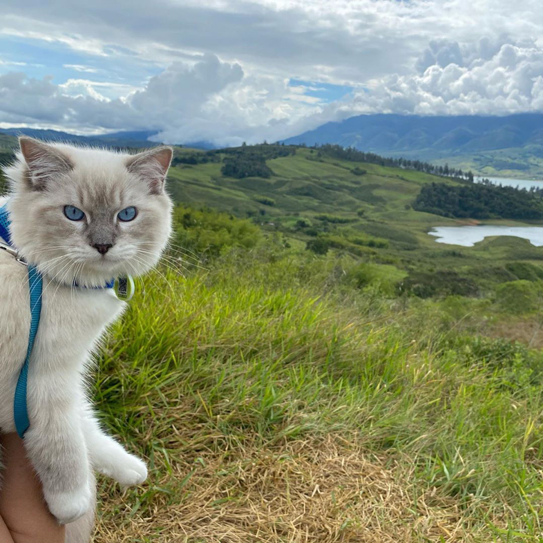 Cat With A Leash Outdoors   Taste of the Wild
