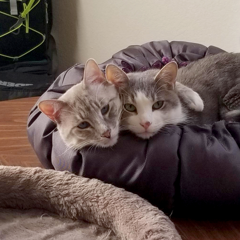 Cats Cuddling On Table   Taste of the Wild