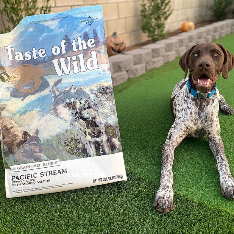 Dog Sitting Next to Taste of the Wild Dog Food Bag   Taste of the Wild