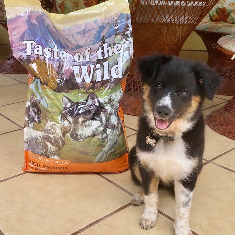 Border Collie Dog Posing With Taste of the Wild Dog Food Bag   Taste of the Wild