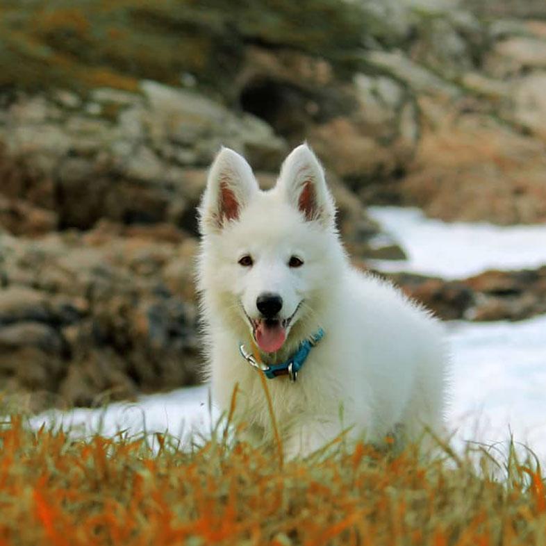 White Dog Running Uphill   Taste of the Wild