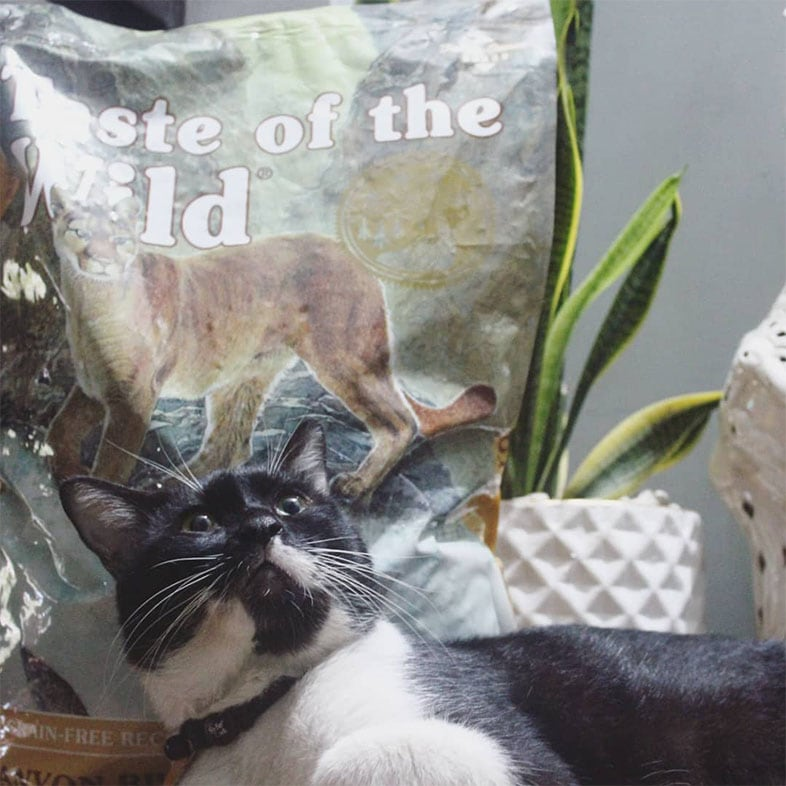 Black and White Cat Looking Surprised Next to Taste of the Wild Cat Food Bag   Taste of the Wild