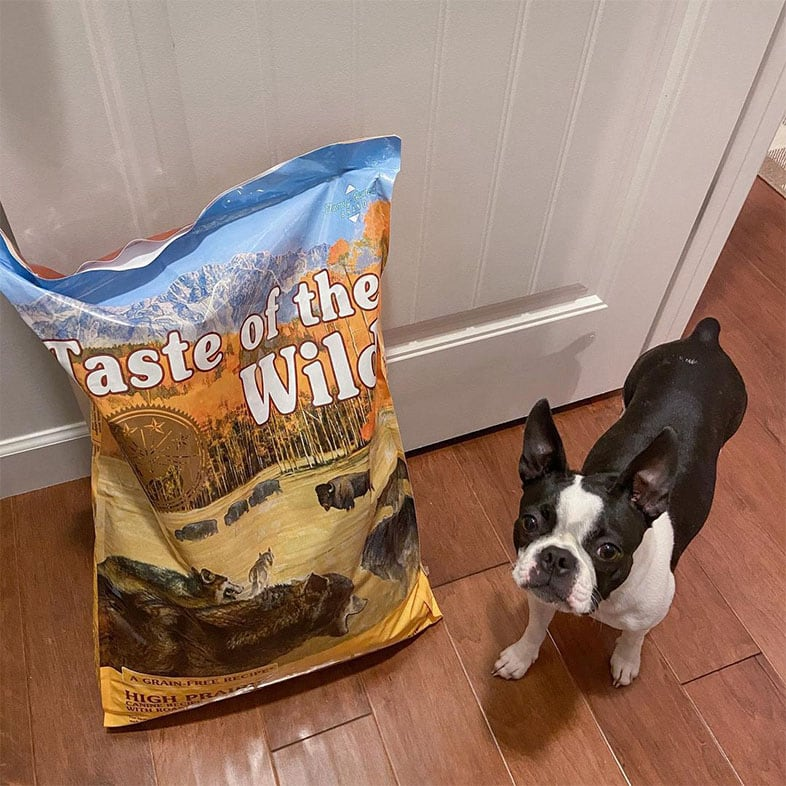 Dog Looking Up Next to Taste of the Wild Dog Food Bag   Taste of the Wild